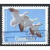 Canada 1096 Birds: Snow Goose CV = 0.30$