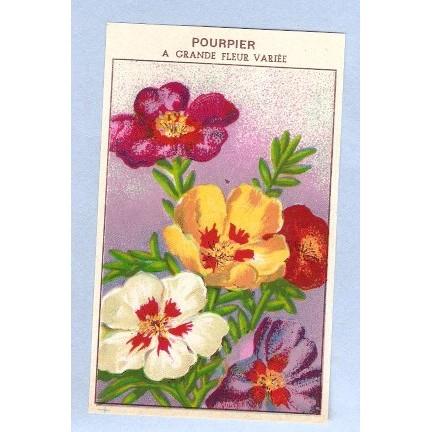 GEN Flower Seed Packet Label Pourpier A Grande Fleur Variee~7
