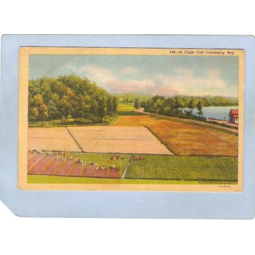MA Cape Cod A Cape Cod Cranberry Bog ma_box2~576