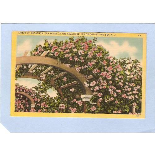 NJ Wildwood By The Sea Arbor Of Beautiful Tea Roses At The Seashore  nj~725
