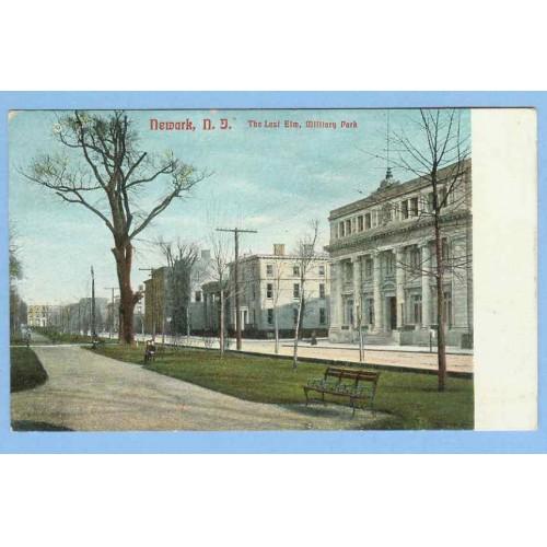 NJ Newark The Last Elm Military Park Street Scene View Of Large Tree In Pa~777