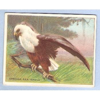 Tobacco Card ~ Company: American Tobacco Company Brand: Hassan Cork Tip Ci~29