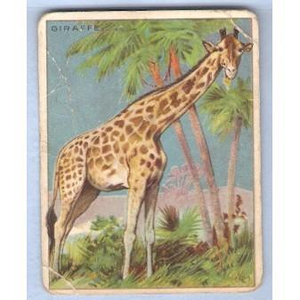 Tobacco Card ~ Company: American Tobacco Company Brand: Hassan Cork Tip Ci~46