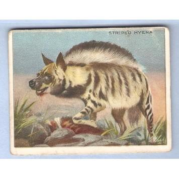 Tobacco Card ~ Company: American Tobacco Company Brand: Hassan Cork Tip Ci~93