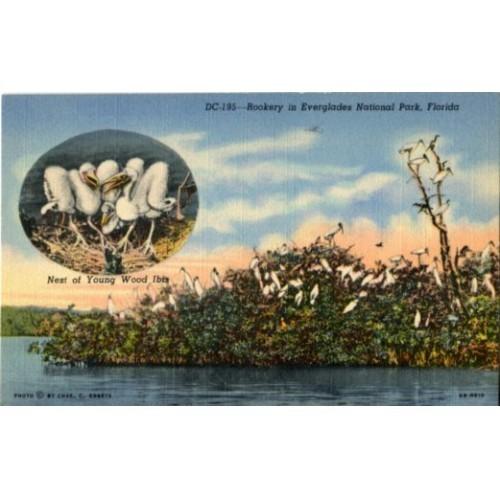 Linen Postcard. Rookery in Everglades National Park, Florida