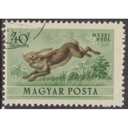 USED HUNGARY #C113 (1953)