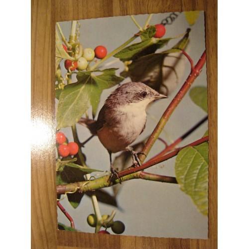 BIRD - birds #86