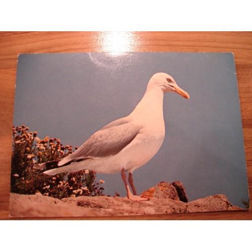 BIRD - birds - SEAGULL #92