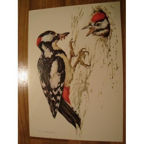 BIRD - birds - WOODPECKER- woodpeckers - nest #97
