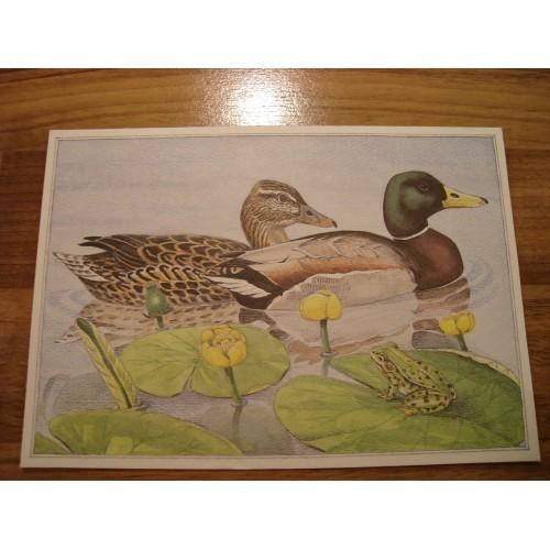 BIRD - birds - DUCK - ducks #110