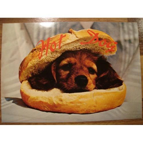DOG - puppy - hamburger #119