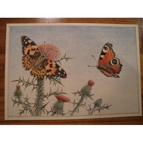BUTTERFLY - butterflies #131