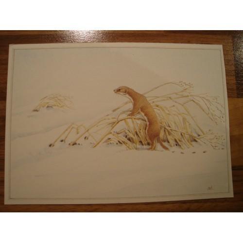 WEASEL - weasels #140