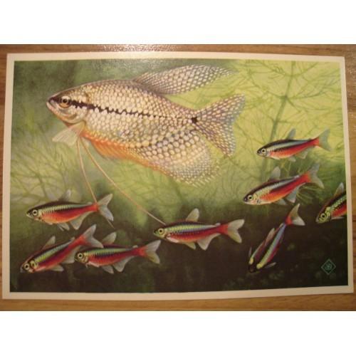 TROPICAL FISH - aquarium #152