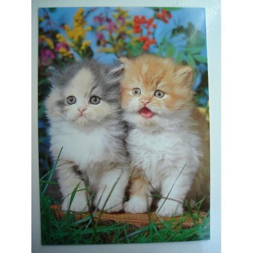 CAT - cats - kitten - kittens - Persian #163