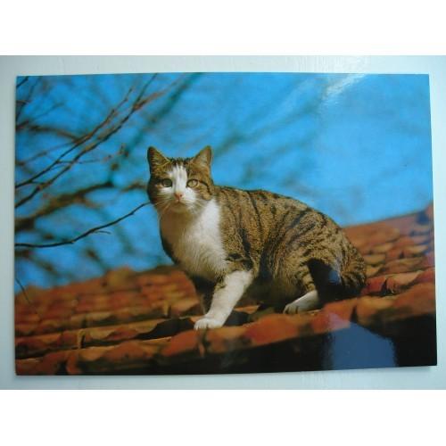 CAT - cats - kitten - kittens - tabby - shorthair #171