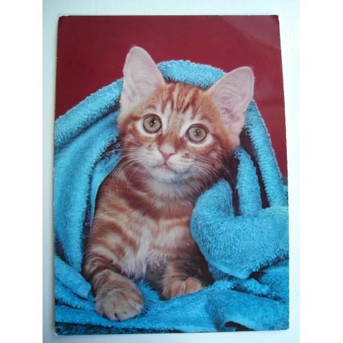 CAT - cats - kitten - kittens - red tabby in towel #185
