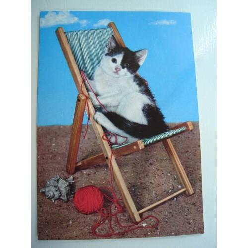 CAT - cats - kitten - kittens - shorthair in sunchair #191