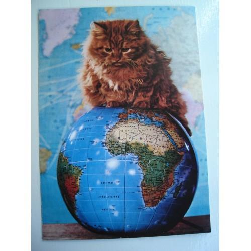 CAT - cats - kitten - kittens - Persian with globe #194