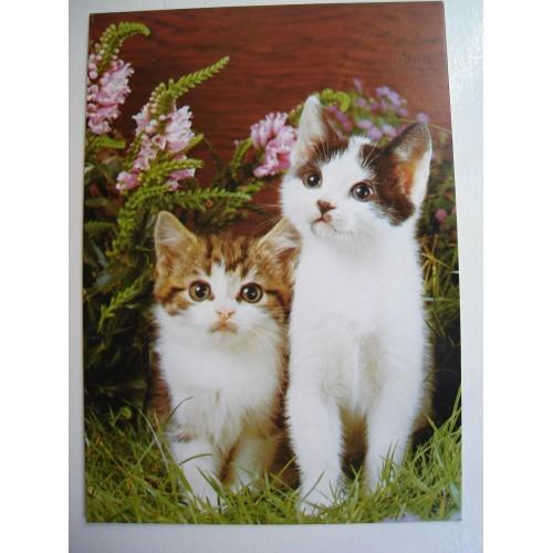 CAT - cats - kitten - kittens - shorthair #198